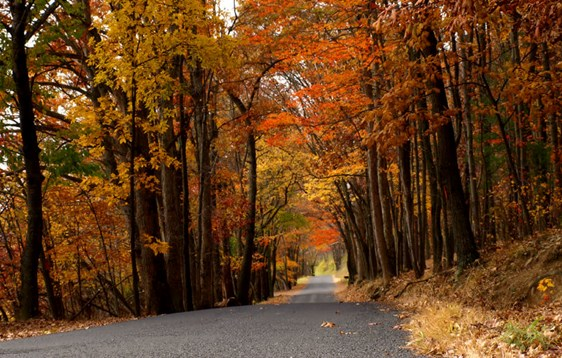 Fall Foliage Tours in Central PA