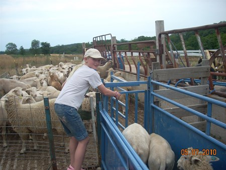 Owens Farm-Sheep Pen